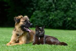 Tierbestattung Merz - Wie soll ein langer, schöner Weg enden? Wir sind Ihr Tierbestatter für Berlin und Brandenburg.